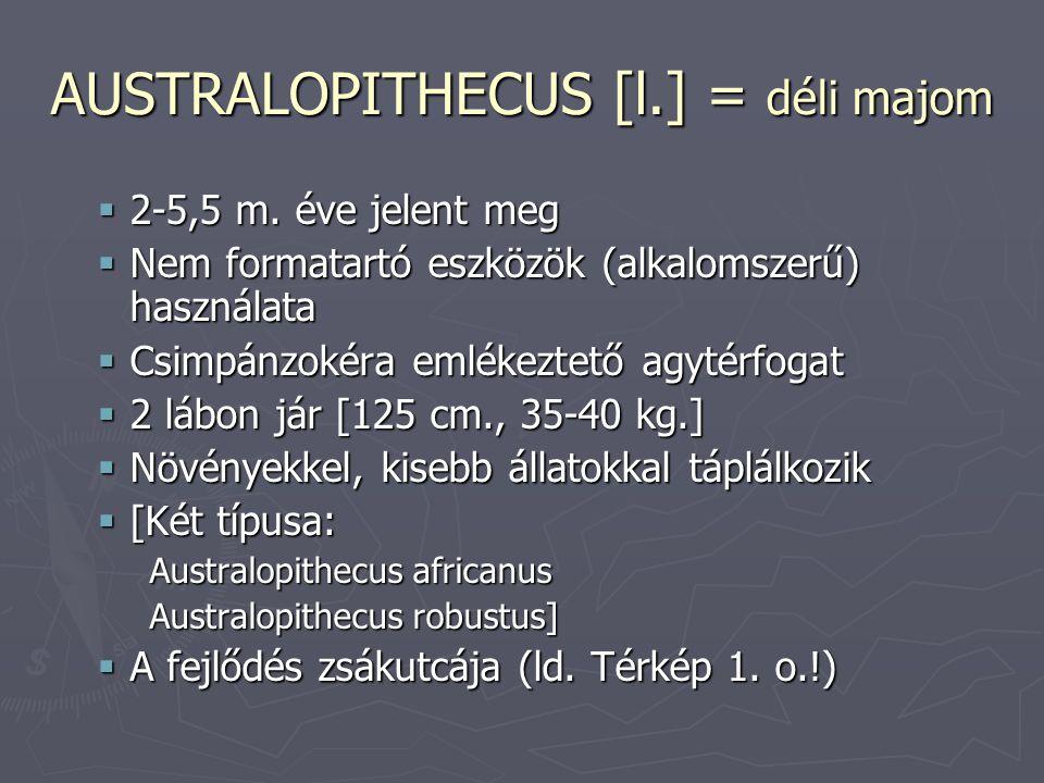AUSTRALOPITHECUS [l.] = déli majom